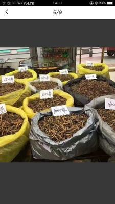 这是一张关于冬虫夏草的产品图片