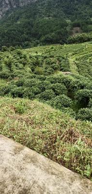 贵州省黔南布依族苗族自治州三都水族自治县都匀红茶 散装 一级