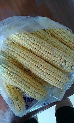 这是一张关于华皖184 黄粒 鲜货的产品图片
