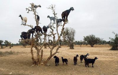 这是一张关于羊肉类 简加工 的产品图片