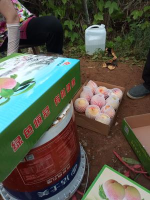 山东省泰安市肥城市水蜜桃 45mm以上 4两以上
