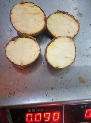 广西壮族自治区梧州市蝶山区油栗 一级 中粒