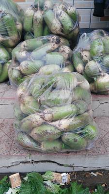 山西省晋中市太谷县青皮萝卜 1~1.5斤