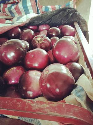 陕西省渭南市临渭区大红袍圆茄 5两以上