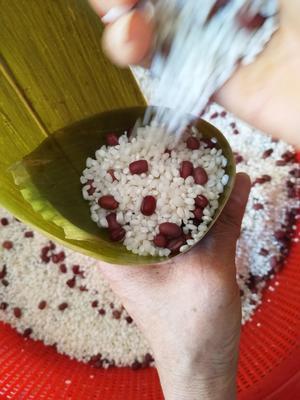 安徽省宣城市宣州区粽子 3-6个月