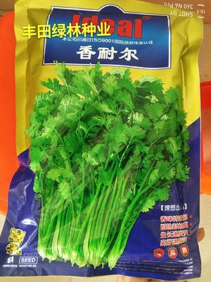 福建省漳州市南靖县香菜种子