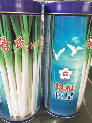 山东省济南市历城区铁杆大葱种子 ≥97% 杂交种
