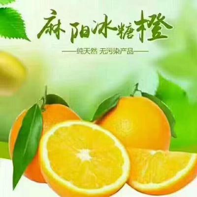 湖南省怀化市麻阳苗族自治县冰糖柑 5.5 - 6cm 1两以下