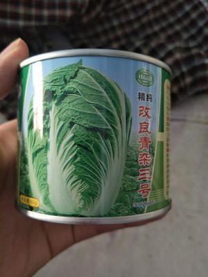江苏省宿迁市沭阳县大白菜种子 杂交种