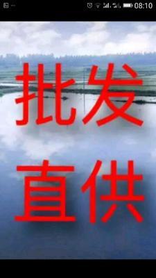 广东省深圳市龙岗区龟甲
