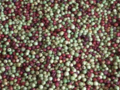 这是一张关于酸枣 直口 10g以下的产品图片
