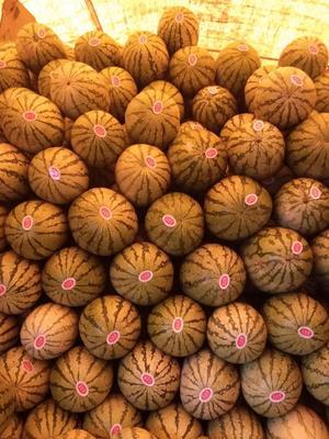 宁夏回族自治区中卫市沙坡头区宁夏西瓜 有籽 2茬 9成熟 10斤打底