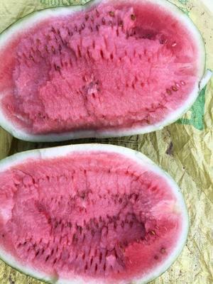 内蒙古自治区通辽市奈曼旗甜王西瓜 有籽 1茬 9成熟 8斤打底