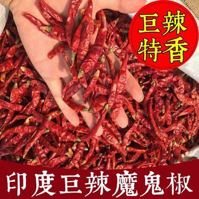 江苏省南京市雨花台区印度魔鬼椒 5~10cm 红色 特辣