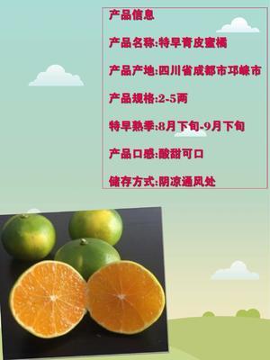 四川省成都市邛崃市特早蜜桔 5.5 - 6cm 3两以上