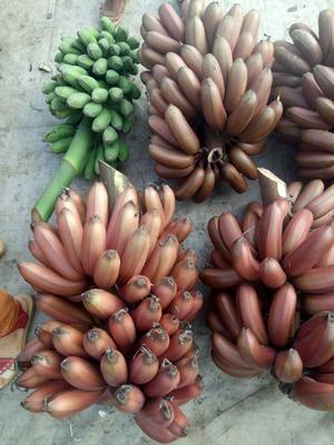 这是一张关于红蕉 八成熟 40斤以下的产品图片