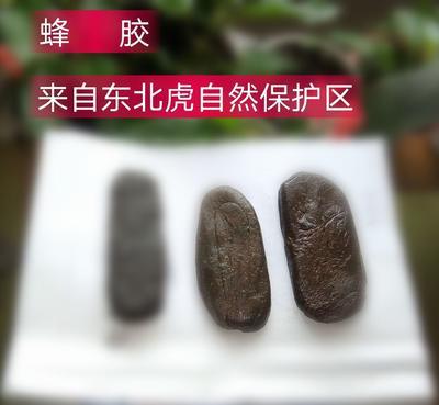 黑龙江省佳木斯市桦南县蜂胶 24个月以上