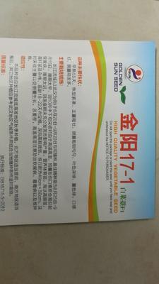湖北省武汉市武昌区白菜苔种子