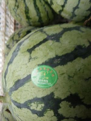 安徽省亳州市涡阳县丽园荃银 有籽 1茬 8成熟 8斤打底
