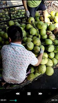 海南省海口市秀英区青椰 3 - 4斤