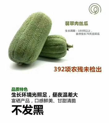 福建省龙岩市新罗区肉丝瓜 25cm以上