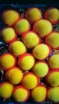 这是一张关于锦绣黄桃 70mm以上 4两以上的产品图片