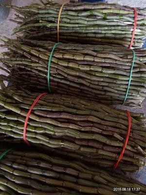 这是一张关于铁皮石斛的产品图片