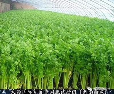 河南省郑州市新密市芹菜专用叶面肥
