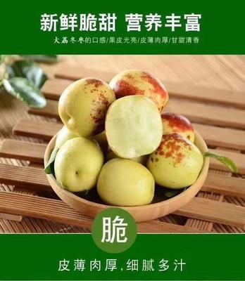 这是一张关于冬枣 直口 10g以下的产品图片