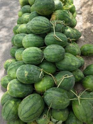 河南省周口市项城市龙卷风西瓜 有籽 1茬 9成熟 3斤打底