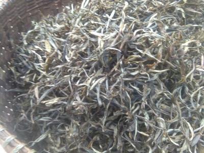 云南省西双版纳傣族自治州勐海县蒙洱银针 盒装 二级