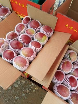这是一张关于红将军苹果 光果 片红 65mm以上的产品图片
