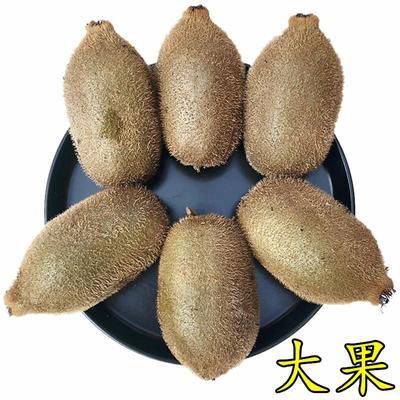 这是一张关于绿心猕猴桃 100~120克的产品图片