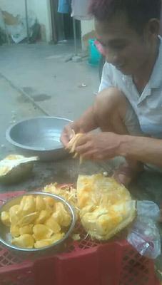 广东省茂名市电白区海南菠萝蜜 10-15斤
