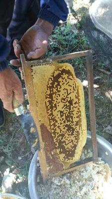 这是一张关于土蜂蜜 塑料瓶装 100% 2年的产品图片