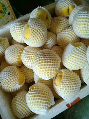 这是一张关于桂东高山黄桃 45mm以上 2 - 3两的产品图片