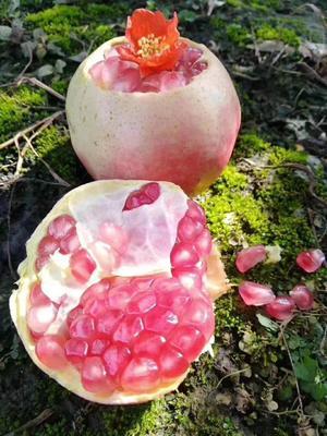 云南省红河哈尼族彝族自治州蒙自市蒙自石榴 0.6 - 0.8斤