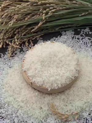 黑龙江省哈尔滨市五常市五常大米 有机大米 晚稻 一等品