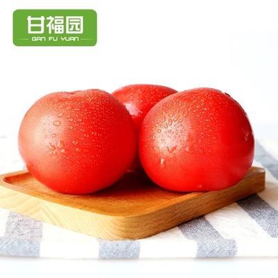 广东省东莞市东莞市旱地西红柿 打冷 大红 弧二以上