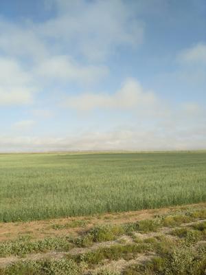 青海省海南藏族自治州共和县青燕麦草