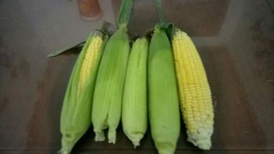 陕西省西安市临潼区水果玉米 黄粒 鲜货
