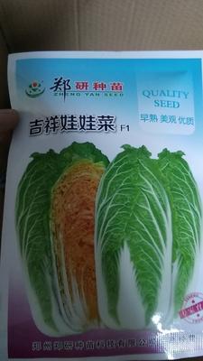 河南省商丘市夏邑县大白菜种子 杂交种