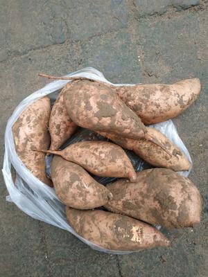 这是一张关于龙薯九号 黄皮 混装通货的产品图片