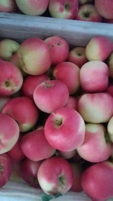 这是一张关于嘎啦苹果 纸袋 条红 70mm以上的产品图片