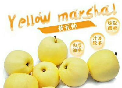 甘肃省天水市清水县黄元帅苹果 纸+膜袋 黄色 75mm以上