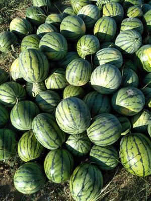 内蒙古自治区乌兰察布市商都县京欣西瓜 有籽 2茬 8成熟 8斤打底