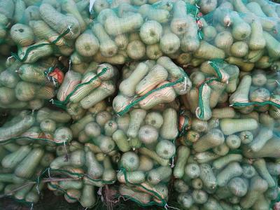 山西省忻州市忻府区奶油南瓜 2~4斤 长条形