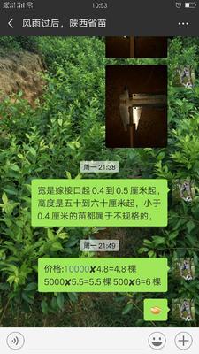 广西壮族自治区梧州市苍梧县银妃三华李树苗