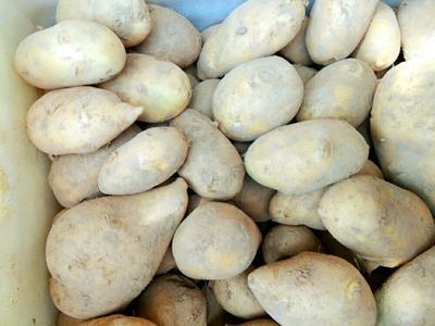 这是一张关于克新一号土豆 2两以上的产品图片