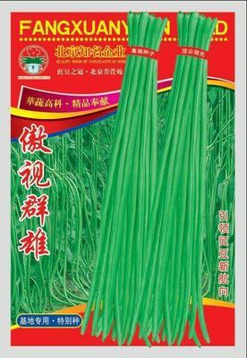 河南省商丘市睢阳区豆角种子 ≥95%